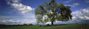 Tree_Alone_In_Field